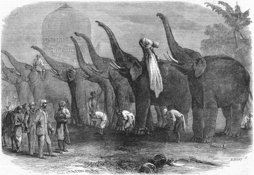 'A squad of elephants saluting the commandant at Dinapore, India' Joseph Austin Benwell