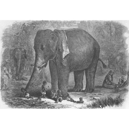 An Elephant taking care of Children, 1863